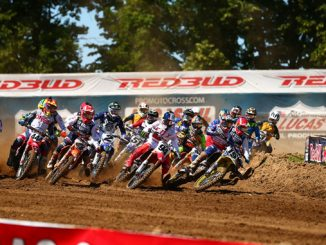 RedBud first turn